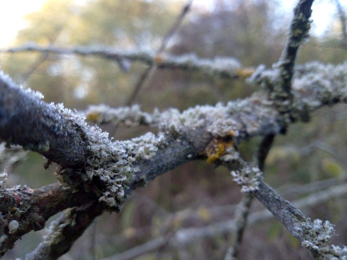 Как мы опрыскиваем плодовые деревья от вредителей и болезней: делимся опытом